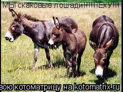 Котоматрица: МЫ скаковые лошади!!!!!!ЕхУ!!!