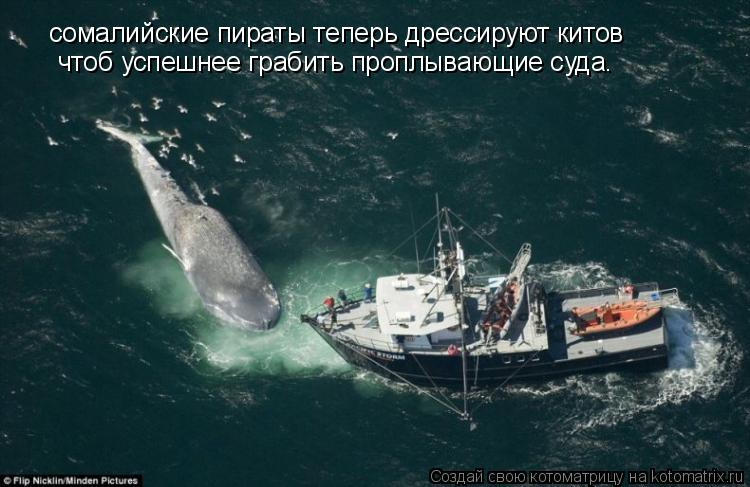 Котоматрица: сомалийские пираты теперь дрессируют китов чтоб успешнее грабить проплывающие суда.