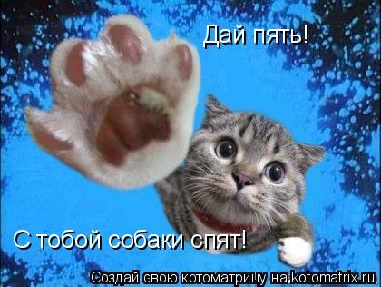 Котоматрица: Дай пять! С тобой собаки спят!