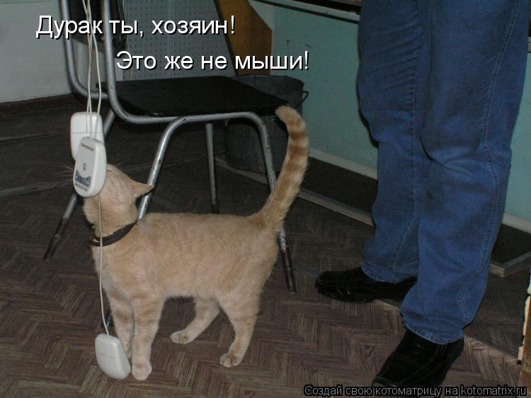Котоматрица: Дурак ты, хозяин! Это же не мыши!