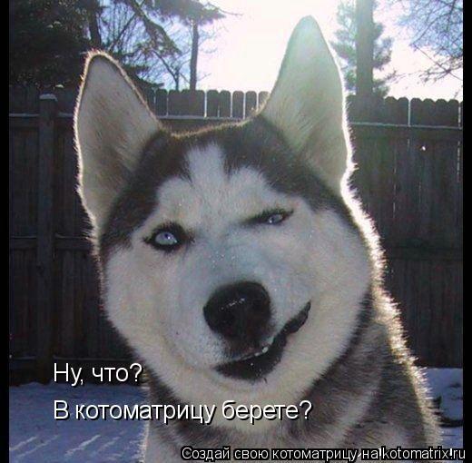 Котоматрица: Ну, что? В котоматрицу берете?