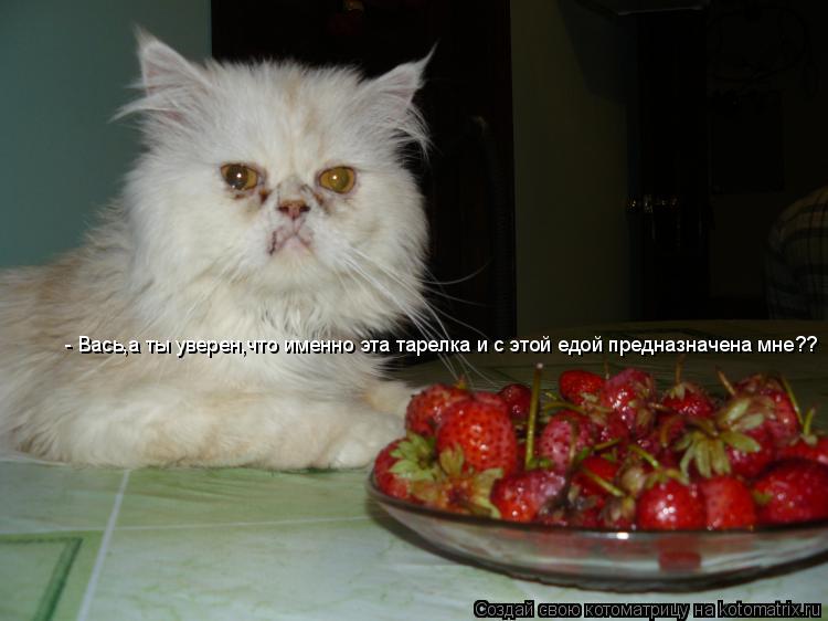 Котоматрица: - Вась,а ты уверен,что именно эта тарелка и с этой едой предназначена мне??