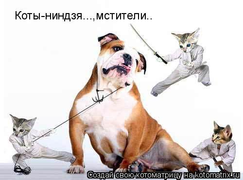Котоматрица: Коты-ниндзя...,мстители..