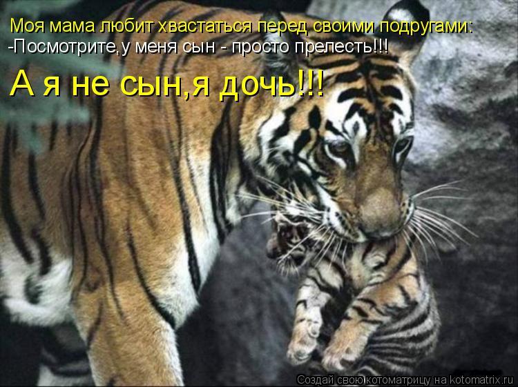 Котоматрица: Моя мама любит хвастаться перед своими подругами: -Посмотрите,у меня сын - просто прелесть!!! А я не сын,я дочь!!!