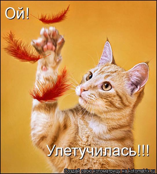 Котоматрица: Ой! Улетучилась!!!