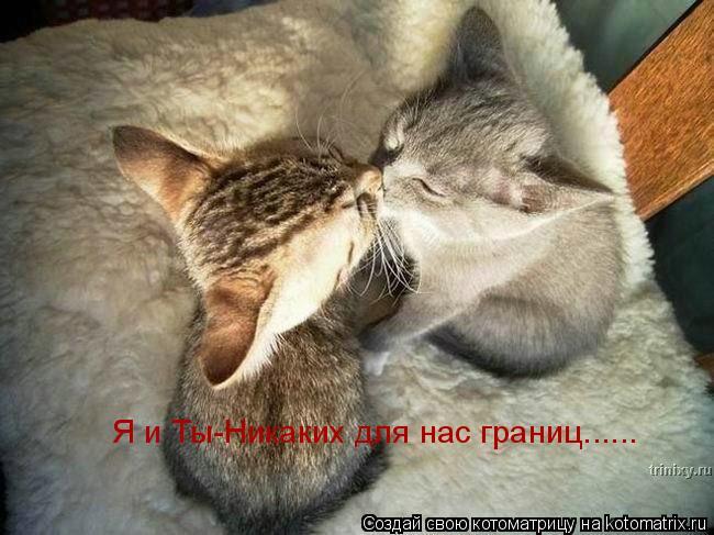 Котоматрица: Я и Ты-Никаких для нас границ......