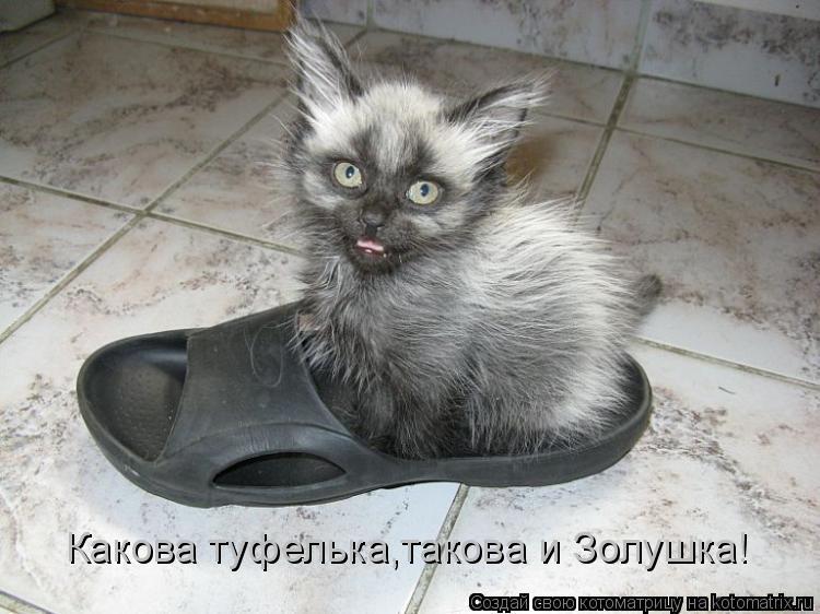 Котоматрица: Какова туфелька,такова и Золушка!