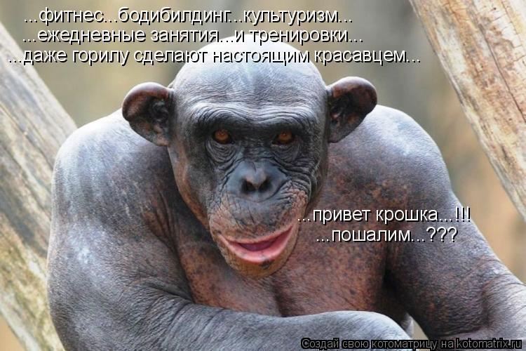 Котоматрица: ...фитнес...бодибилдинг...культуризм... ...ежедневные занятия...и тренировки... ...даже горилу сделают настоящим красавцем... ...привет крошка...!!! .