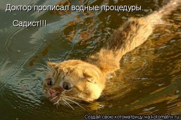 Котоматрица: Доктор прописал водные процедуры. Садист!!!