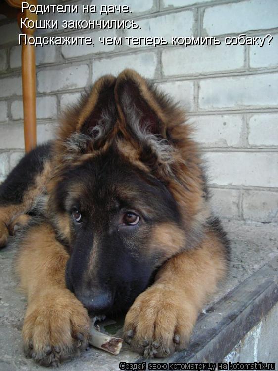 Котоматрица: Родители на даче. Кошки закончились. Подскажите, чем теперь кормить собаку?