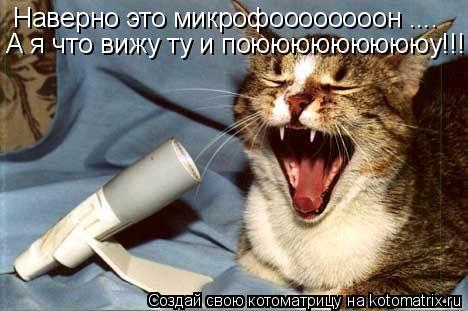 Котоматрица: Наверно это микрофоооооооон .... А я что вижу ту и поюююююююююу!!!