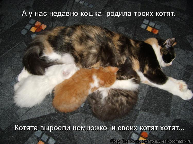 Котоматрица: Котята выросли немножко  и своих котят хотят...    А у нас недавно кошка  родила троих котят.