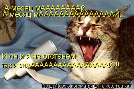 Котоматрица: А месяц мААААААААй... А месяц мАААААААААААААААЙ... И он,и я не отстанем, так и знААААААААААААААААААЙ!!!