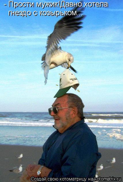 Котоматрица: - Прости мужик!Давно хотела гнездо с козырьком...