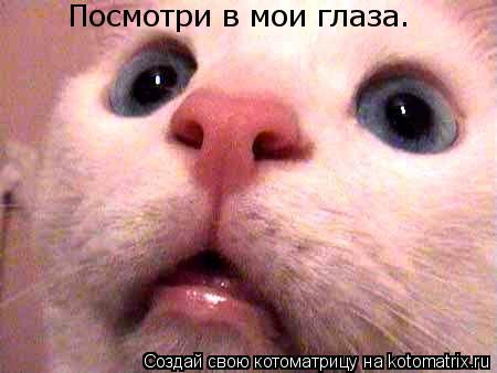 Котоматрица: Посмотри в мои глаза.