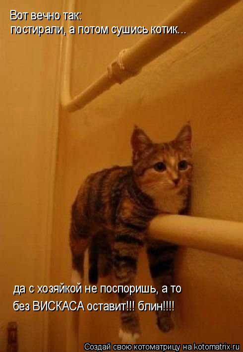 Котоматрица: Вот вечно так: постирали, а потом сушись котик... да с хозяйкой не поспоришь, а то без ВИСКАСА оставит!!! блин!!!!
