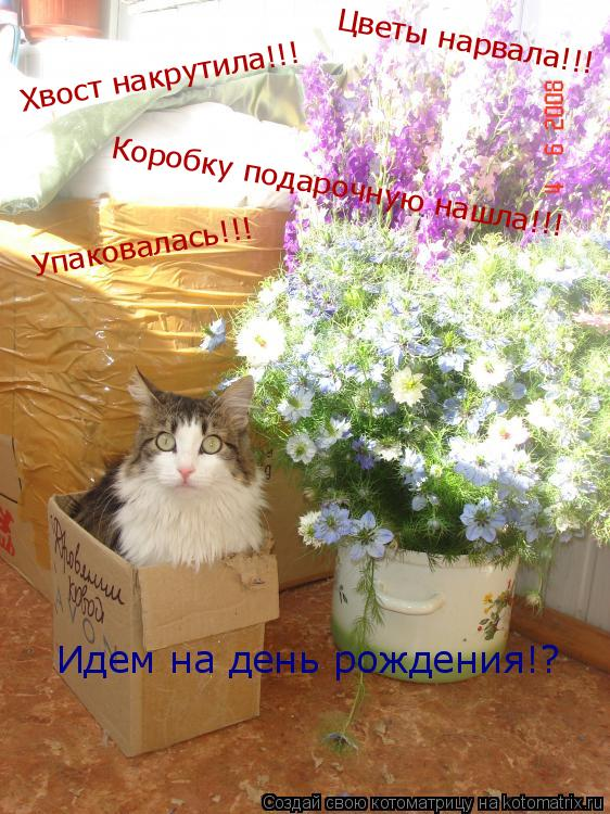 Котоматрица: Цветы нарвала!!! Коробку подарочную нашла!!! Хвост накрутила!!! Упаковалась!!! Идем на день рождения!?