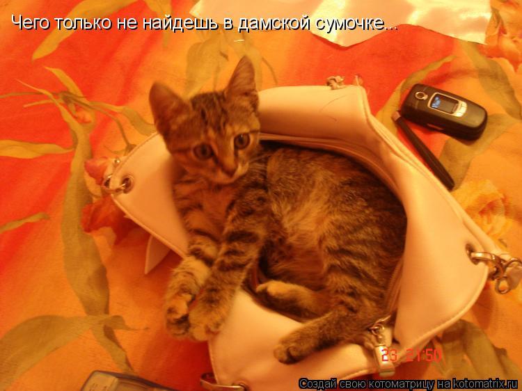 Котоматрица: Чего только не найдешь в дамской сумочке...