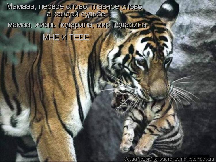 Котоматрица: Мамааа, первое слово, главное слово а каждой судьбе мамаа, жизнь подарила, мир подарила МНЕ И ТЕБЕ