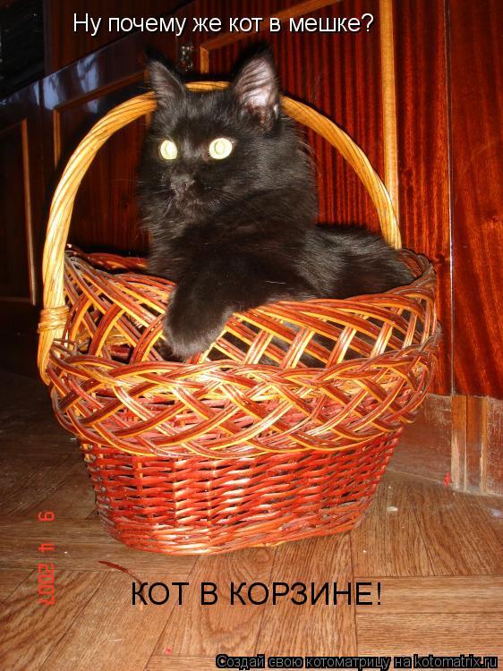 Котоматрица: Ну почему же кот в мешке? КОТ В КОРЗИНЕ!
