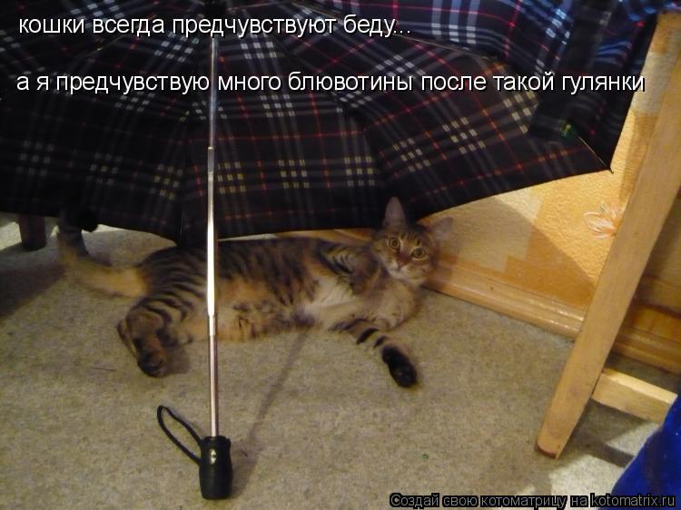 Котоматрица: кошки всегда предчувствуют беду... а я предчувствую много блювотины после такой гулянки