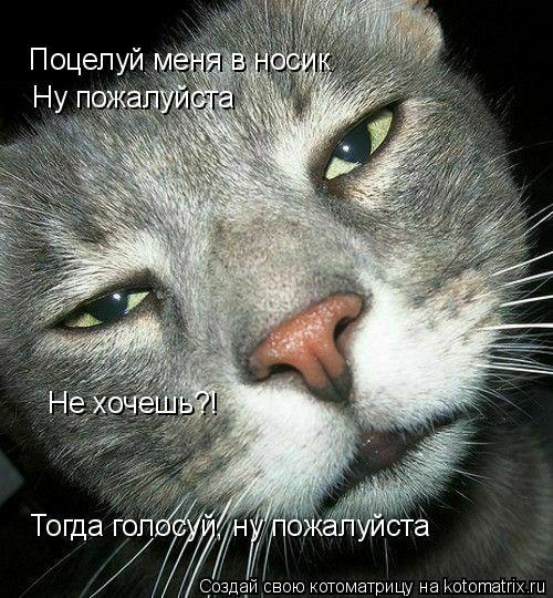 Котоматрица: Поцелуй меня в носик Ну пожалуйста Не хочешь?! Тогда голосуй, ну пожалуйста