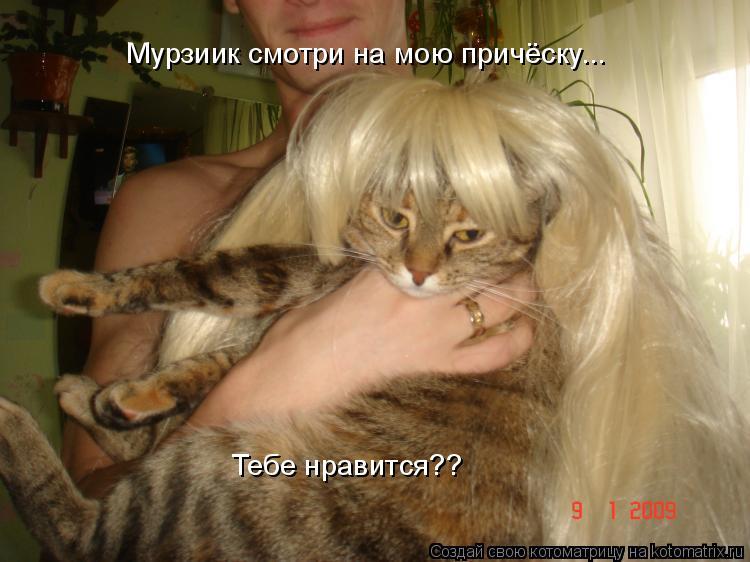 Котоматрица: Мурзиик смотри на мою причёску... Тебе нравится??
