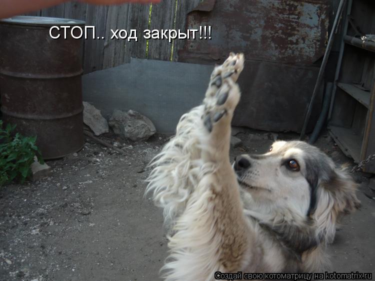 Котоматрица: СТОП.. ход закрыт!!!