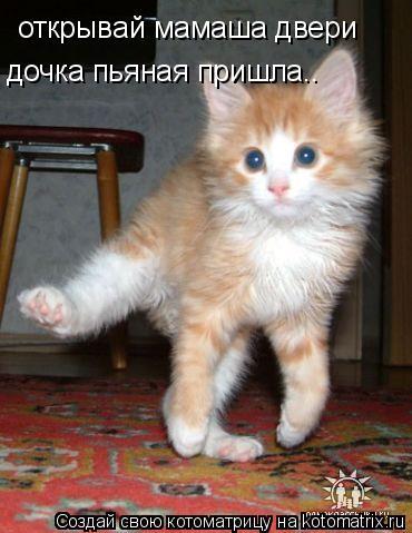 Котоматрица: открывай мамаша двери дочка пьяная пришла..
