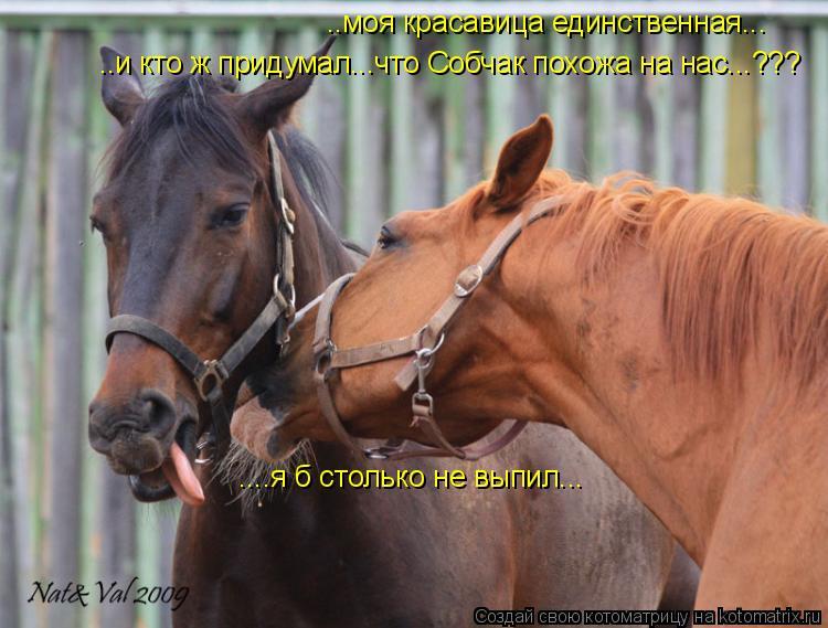 Котоматрица: ..моя красавица единственная... ..и кто ж придумал...что Собчак похожа на нас...??? ....я б столько не выпил...