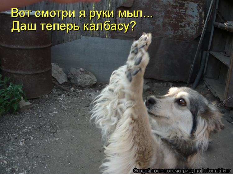 Котоматрица: Вот смотри я руки мыл... Вот смотри я руки мыл... Даш теперь калбасу?