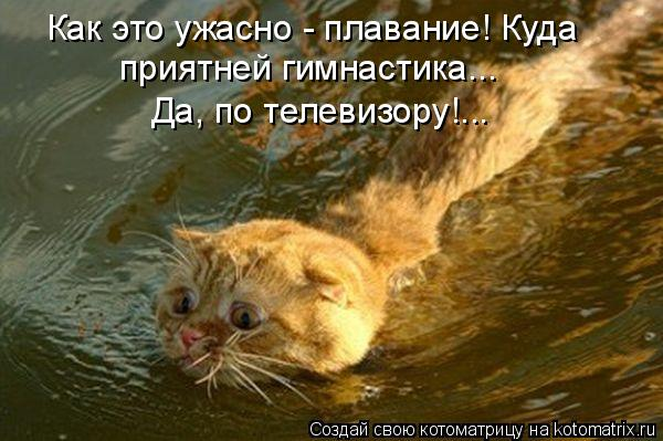 Котоматрица: Как это ужасно - плавание! Куда приятней гимнастика...  Да, по телевизору!...