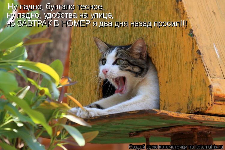 Котоматрица: Ну ладно, бунгало тесное,  ну ладно, удобства на улице, но ЗАВТРАК В НОМЕР я два дня назад просил!!!