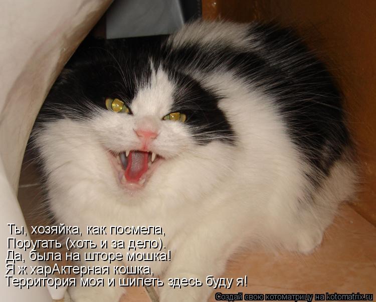Котоматрица: Ты, хозяйка, как посмела, Поругать (хоть и за дело)…  Да, была на шторе мошка! Я ж харАктерная кошка, Территория моя и шипеть здесь буду я!