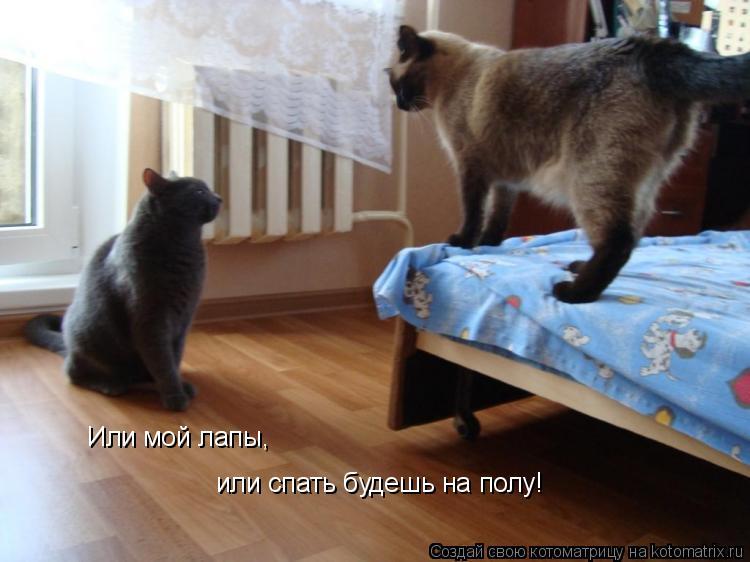 Котоматрица: Или мой лапы, или спать будешь на полу!