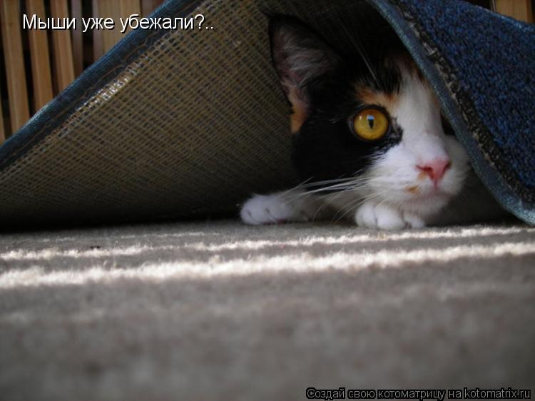 Котоматрица: Мыши уже убежали?..