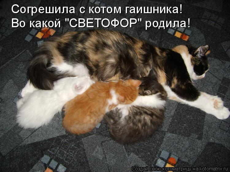 """Котоматрица: Согрешила с котом гаишника! Во какой """"СВЕТОФОР"""" родила!"""