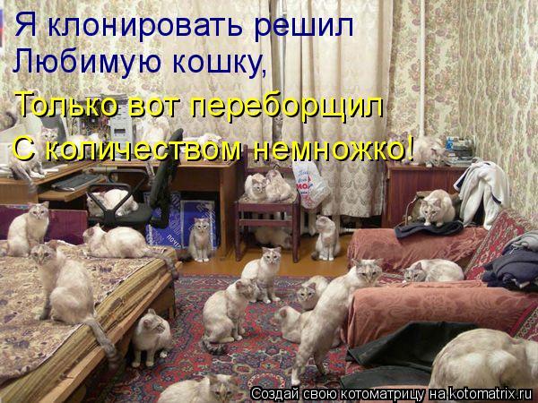 Котоматрица: Я клонировать решил Любимую кошку, Только вот переборщил С количеством немножко!