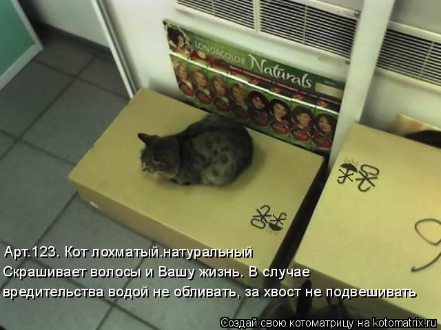 Котоматрица: Арт.123. Кот лохматый.натуральный Скрашивает волосы и Вашу жизнь. В случае вредительства водой не обливать, за хвост не подвешивать