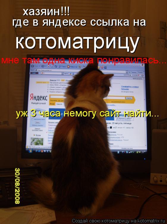 Котоматрица: хазяин!!! где в яндексе ссылка на  котоматрицу мне там одна киска понравилась... уж 3 часа немогу сайт найти...