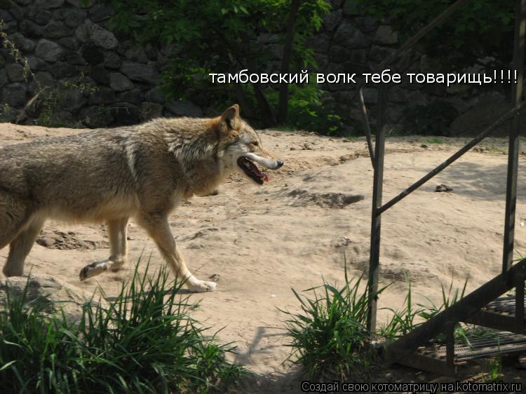 Котоматрица: тамбовский волк тебе товарищь!!!!