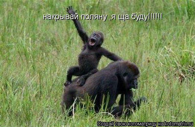 Котоматрица: накрывай поляну ,я ща буду!!!!!!