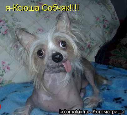 Котоматрица: я-Ксюша Собчяк!!!!