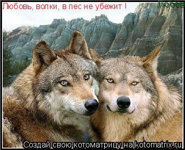 Котоматрица: Любовь, волки, в лес не убежит ! Любовь, волки, в лес не убежит !