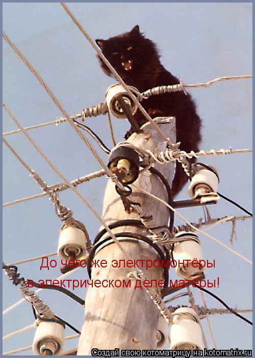 Котоматрица: До чего же электромонтёры в электрическом деле матёры!