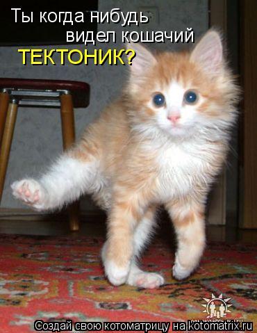 Котоматрица: Ты когда нибудь видел кошачий ТЕКТОНИК?