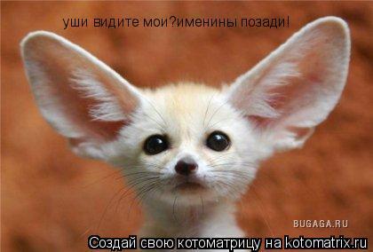 Котоматрица: уши видите мои?именины позади!