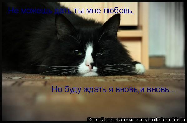 Котоматрица: Не можешь дать ты мне любовь, Но буду ждать я вновь,и вновь...