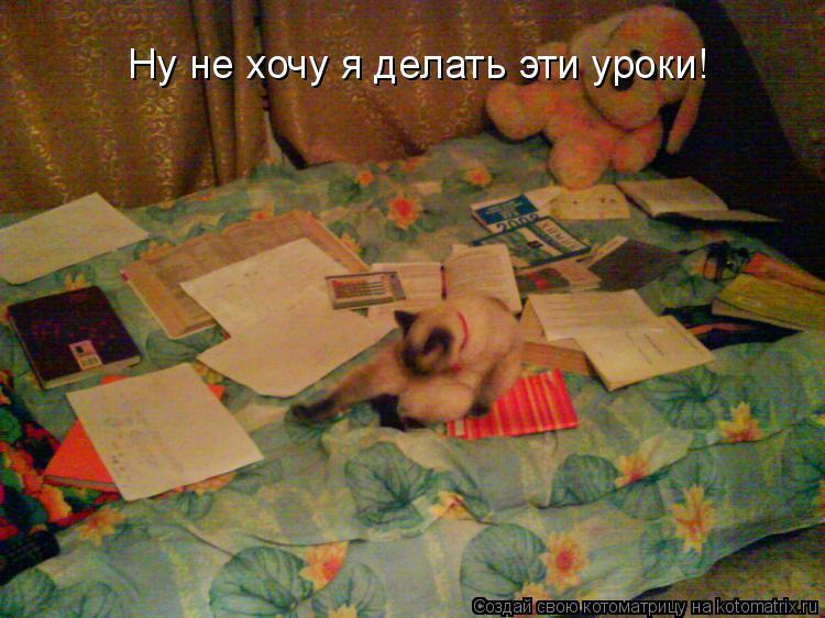 Котоматрица: Ну не хочу я делать эти уроки!