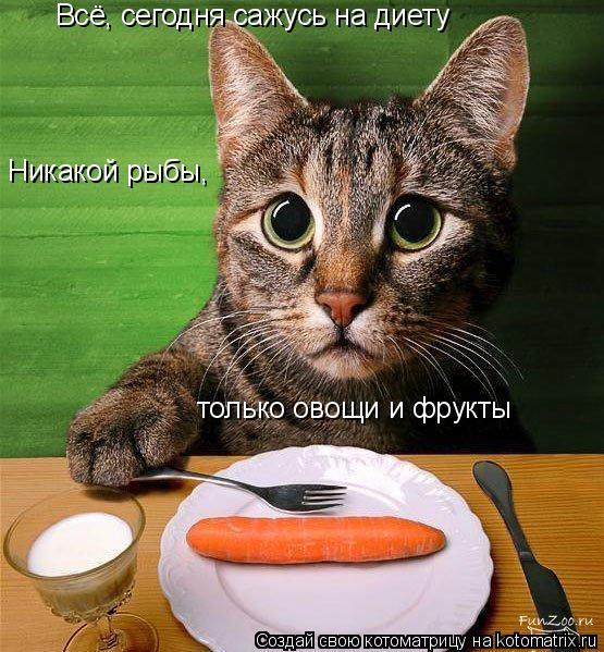 Котоматрица: Всё, сегодня сажусь на диету Никакой рыбы,  только овощи и фрукты